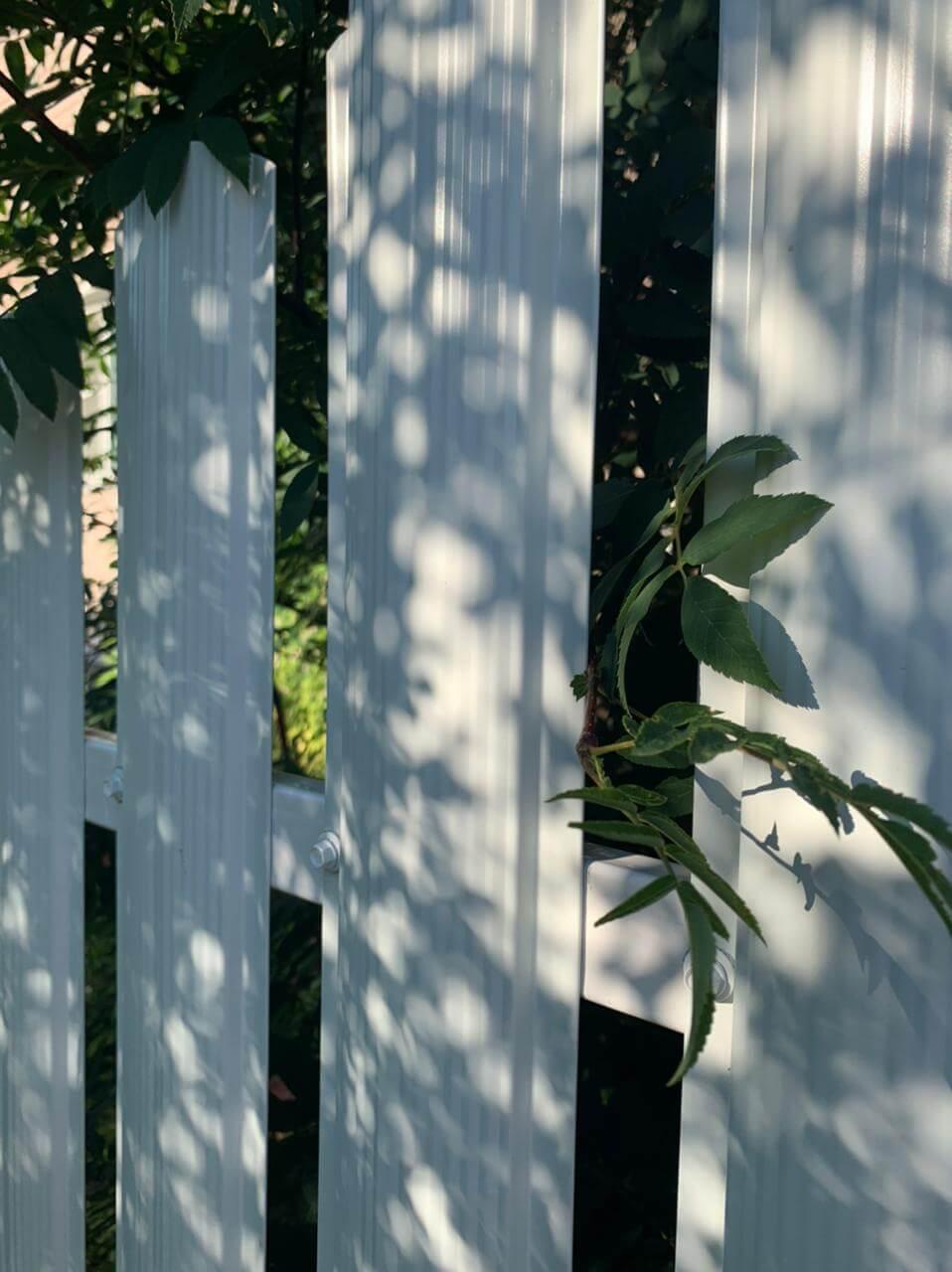 забор из штакетника белый фото6